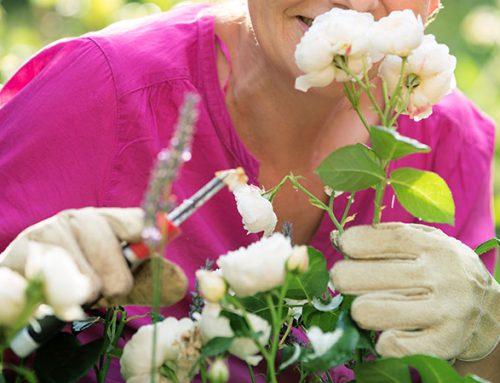 Rose Pruning Advice